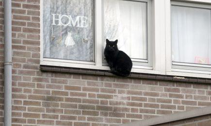 Huisvesting bijzondere doelgroepen in Velsen